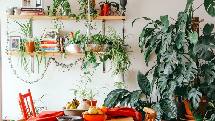 Indoor Plants for Free Spirit Personality Type