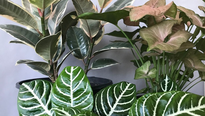 People Are Obsessing Over This Group of Plants: Pink, White and Green Plant Design Idea