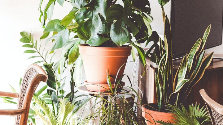 High maintenance plant humidity solution