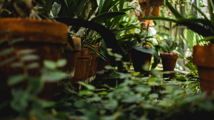 Most Loved Indoor Plants To Root From Cuttings In Water