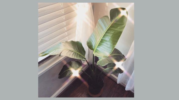 Best sunny window indoor plant pick